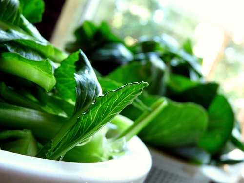 Leafy greens are an excellent source of nutrition during pregnancy