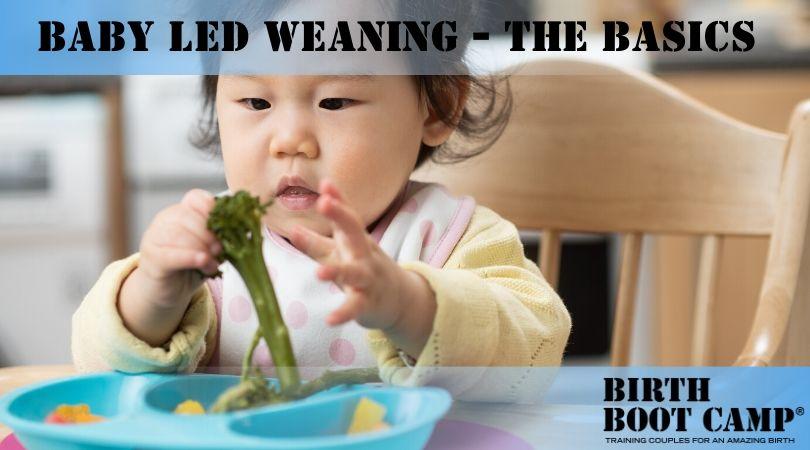 baby led weaning baby eating brocoli